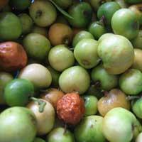 Früchte des Christusdorns